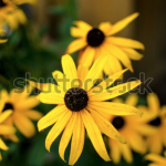 Screen Shot 2019 12 18 at 12.30.42 150x150 - Visit my Shutterstock Gallery