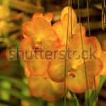 Screen Shot 2020 04 30 at 10.36.30 AM 150x150 - Visit my Shutterstock Gallery