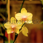 Screen Shot 2020 04 30 at 10.37.08 AM 150x150 - Visit my Shutterstock Gallery