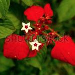Screen Shot 2020 04 30 at 10.37.36 AM 150x150 - Visit my Shutterstock Gallery