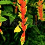 Screen Shot 2020 04 30 at 10.37.58 AM 150x150 - Visit my Shutterstock Gallery